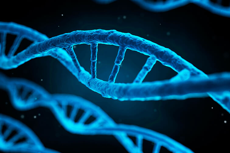 基因组分析