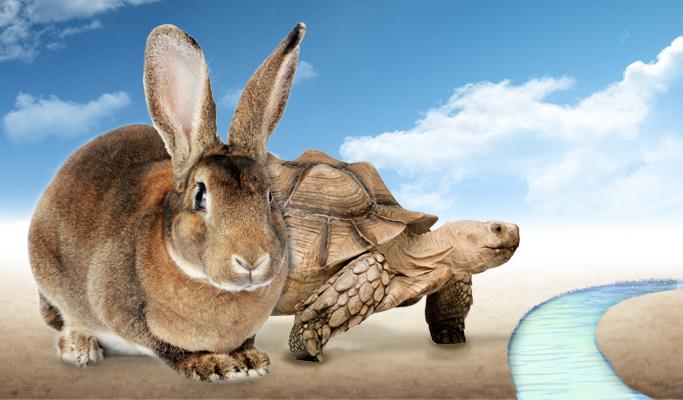 토끼와 거북이 사진