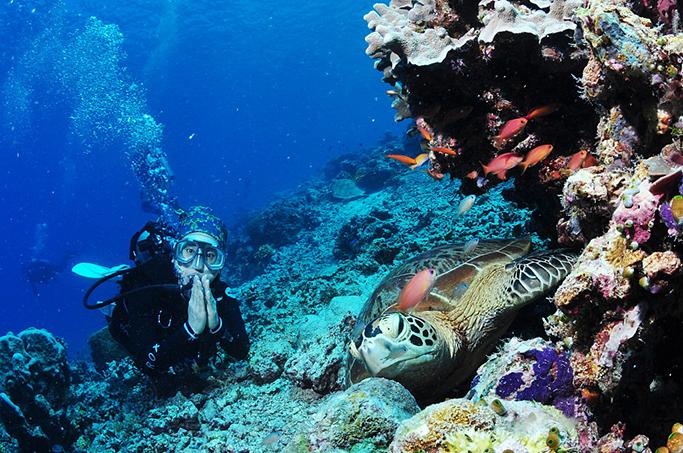 세계 10대 다이빙 명소인 말레이시아 시파단(Sipadan)에서 만난 거북이