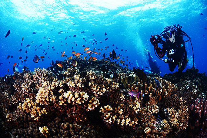 남태평양의 피지섬(Fiji) 바다