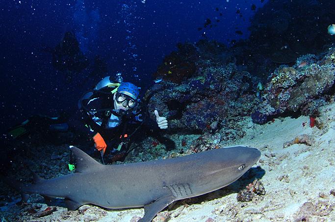 생각보다 온순하며 항상 같은 곳에서 잠을 자는 상어. 이것은 화이트 팁 상어(White Tip Shark)의 모습