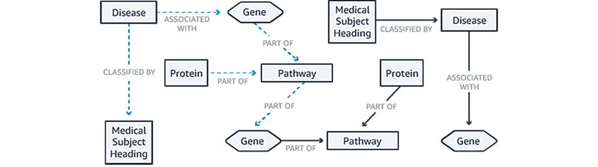 질병, 원인, 유전자 등의 노드와 이들간의 상관관계를 표현
