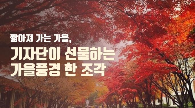 가을 한조각