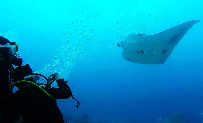 10m가 넘는 길이의 팔라우(Palau) 대형 바다가오리
